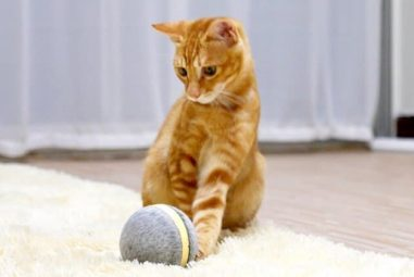 Wicked Ball: la pallina intelligente per cani e gatti
