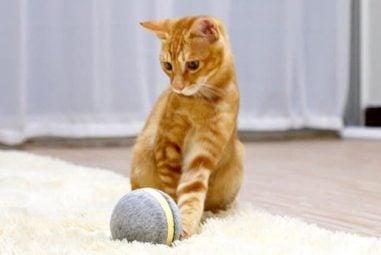 Wicked Ball: la pallina intelligente per cani e gatti